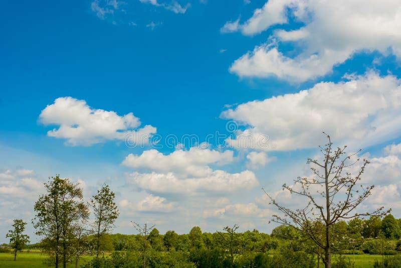 Céu azul com algumas nuvens e campo verde com árvores imagem de stock royalty free