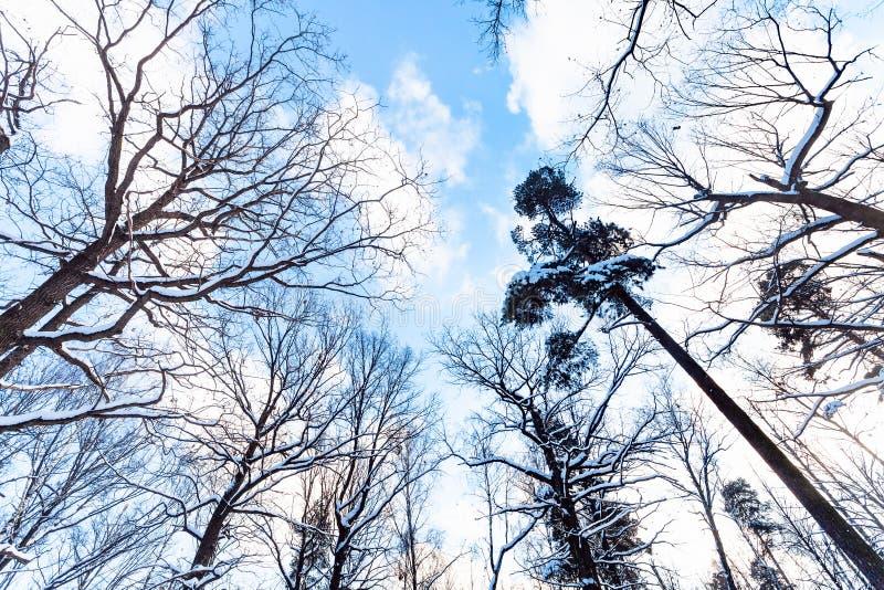 Céu azul com as nuvens brancas entre árvores fotografia de stock royalty free