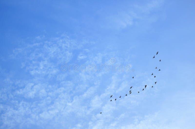 Céu azul com nuvens dispersadas e um grupo de pássaros de voo foto de stock