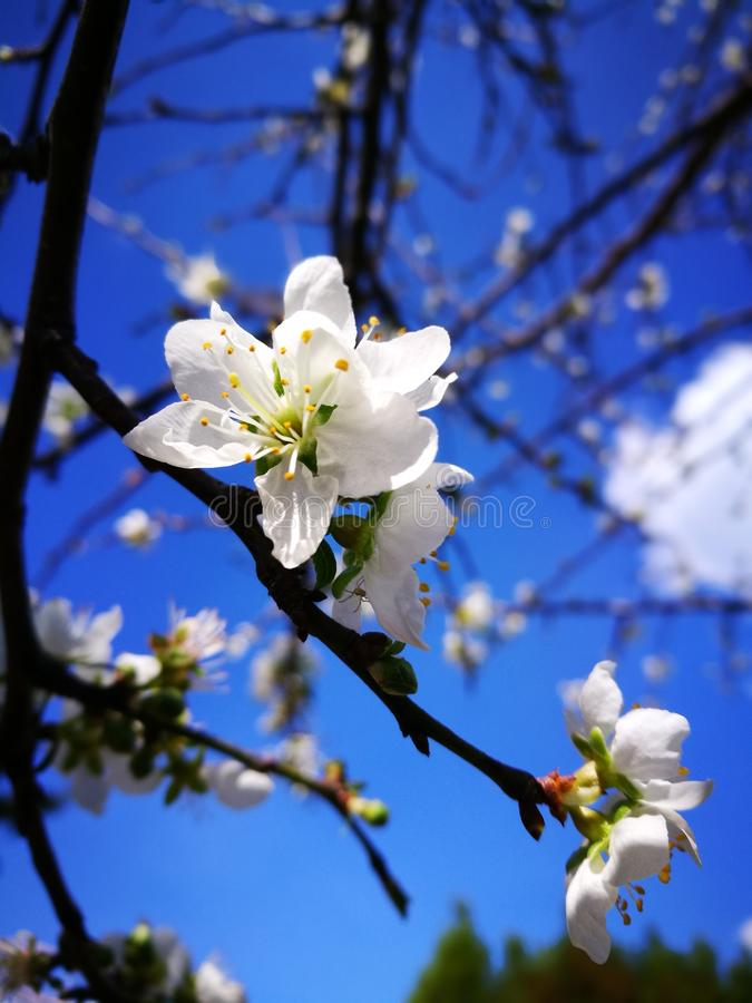 Céu azul da flor fotografia de stock