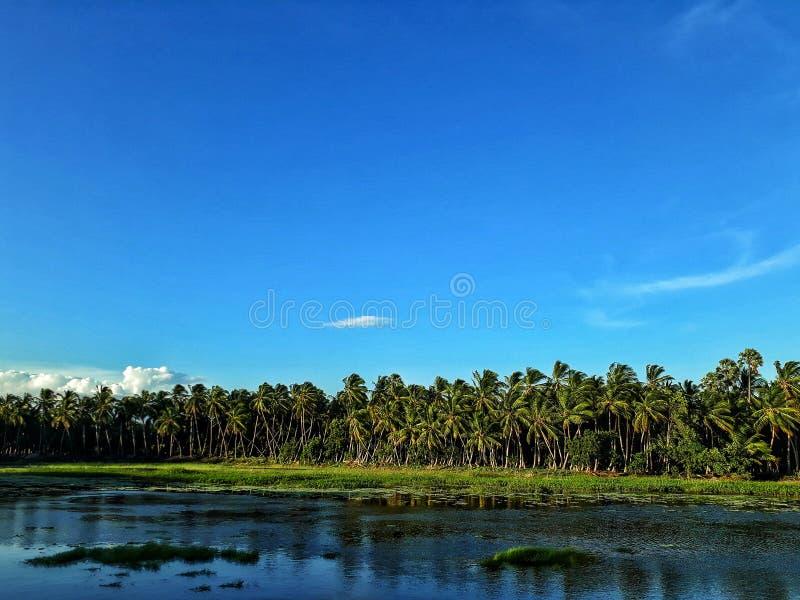 Céu azul da nuvem do lago e gramas verdes fotos de stock