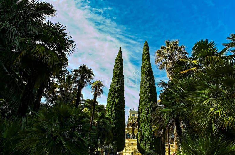 Céu azul das árvores do verde do parque da cidade imagens de stock royalty free