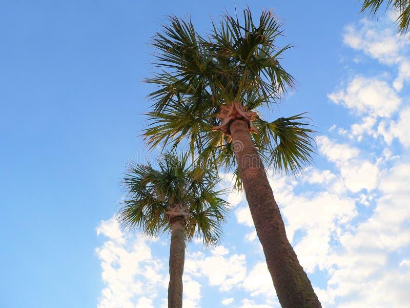 Céu azul das palmeiras da palmeira nas nuvens imagem de stock