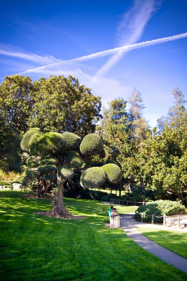 Céu azul do jardim japonês artístico da árvore imagens de stock royalty free