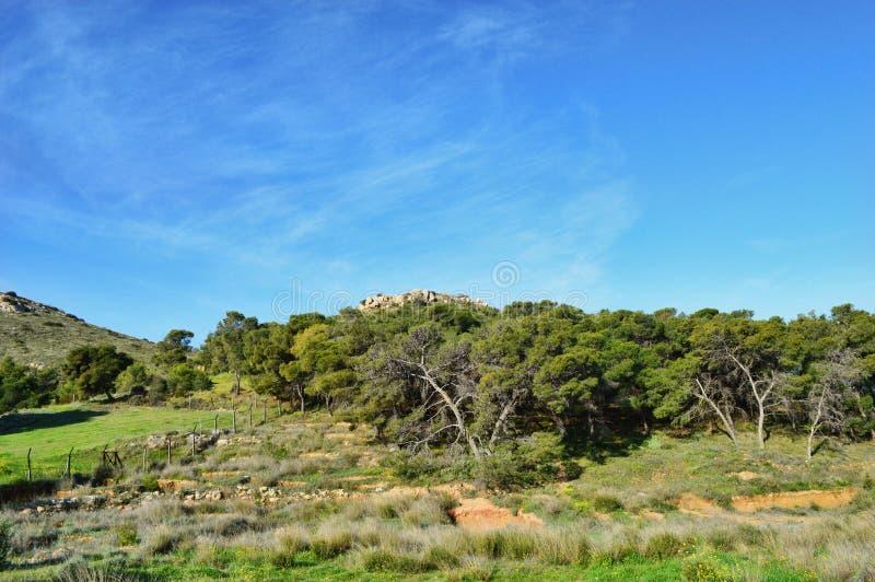 Céu azul e árvores imagem de stock royalty free