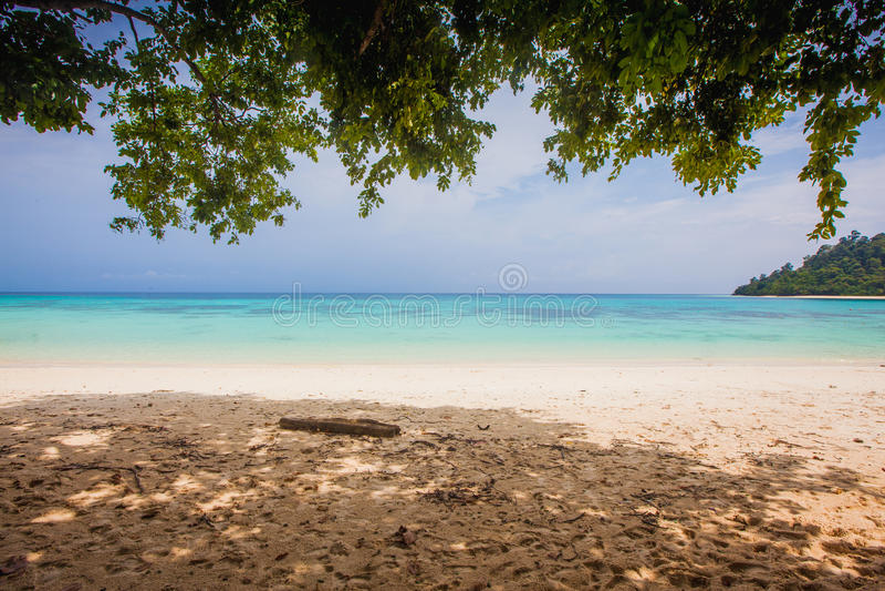 Céu azul e entrada das árvores a encalhar fotografia de stock royalty free