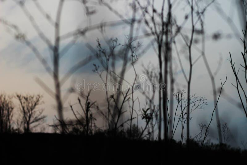 Céu azul e galhos frágeis imagens de stock