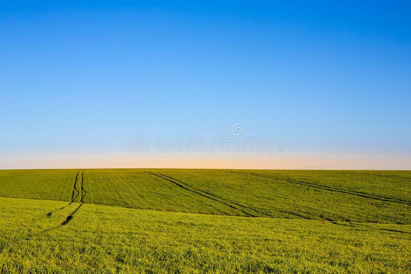 Céu azul e grama verde imagem de stock royalty free