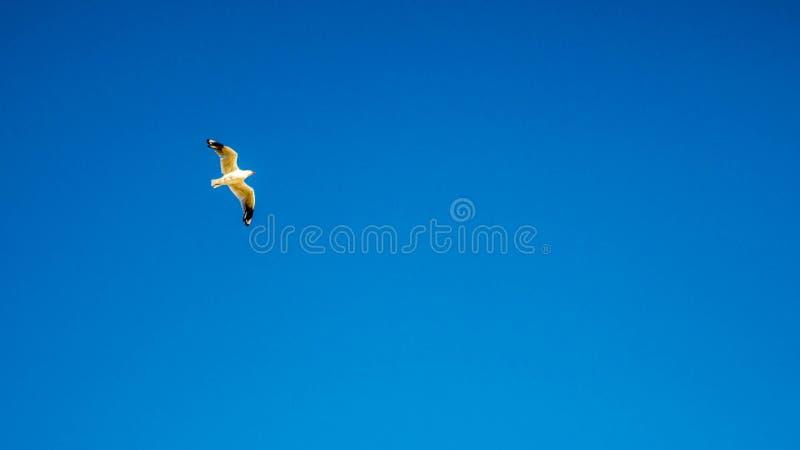 Céu azul largo imagens de stock