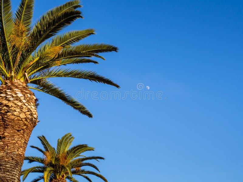 Céu azul, palmeiras e lua pequena brilhando no céu imagens de stock royalty free