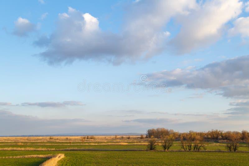 Céu azul, prados, ocasionalmente cobertos de vegetação verdes com os juncos e as árvores subdimensionados como um fundo ou um con imagens de stock royalty free
