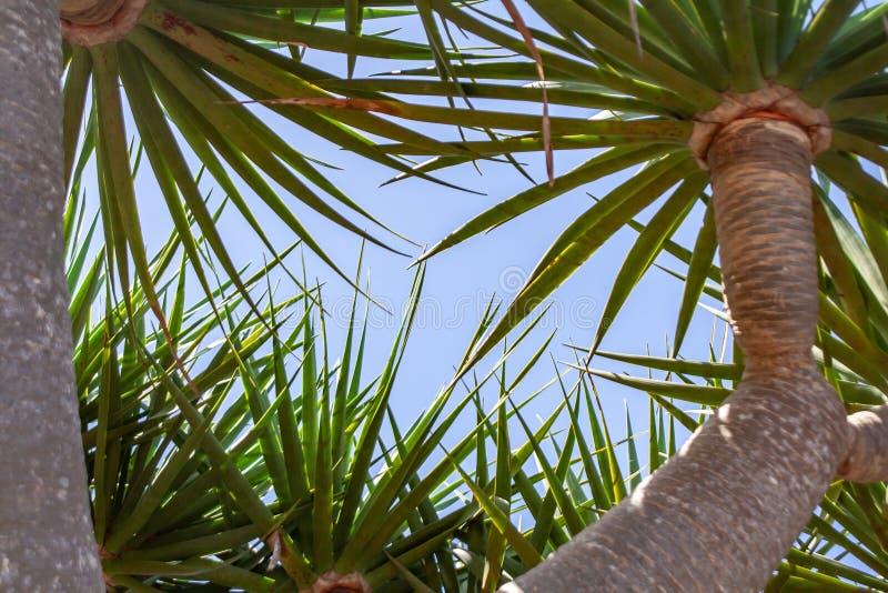Céu azul sobre mim com fim acima do telhado da palma imagem de stock