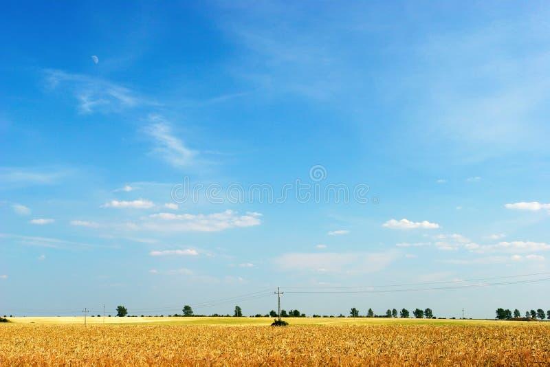 Céu azul sobre o campo do cereal fotos de stock