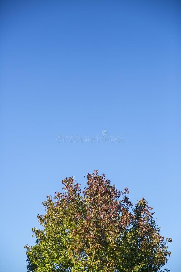 Céu azul sobre uma árvore 1 imagens de stock royalty free