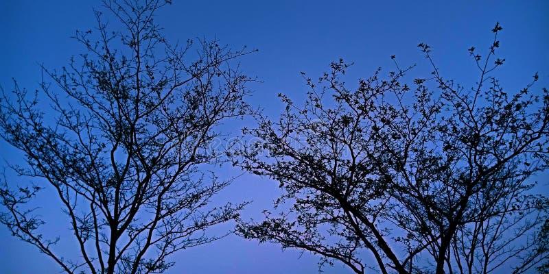 Céu bonito atrás da foto do estoque do papel de parede da árvore imagens de stock