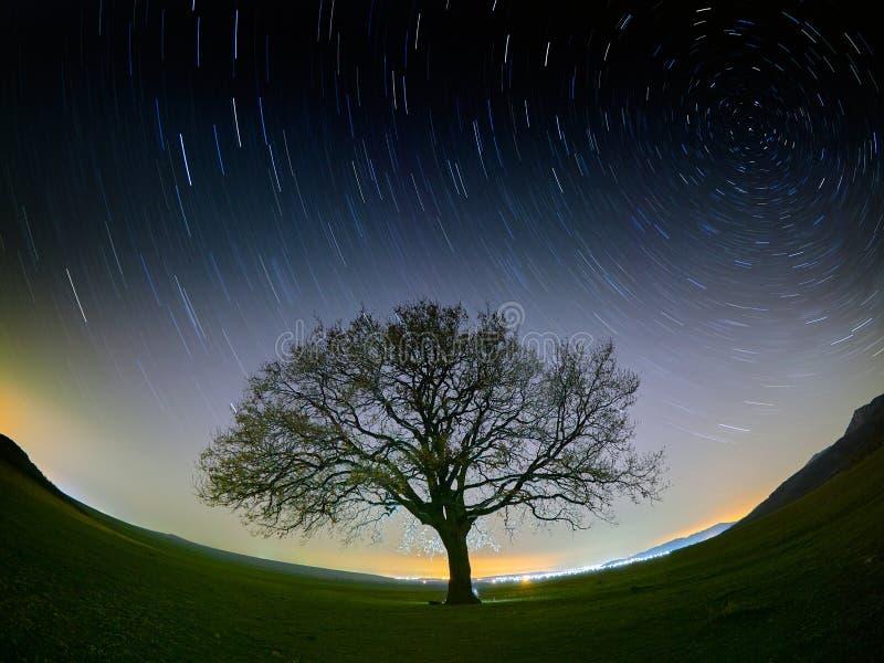 Céu bonito na noite com startrails e silhueta da árvore fotografia de stock royalty free