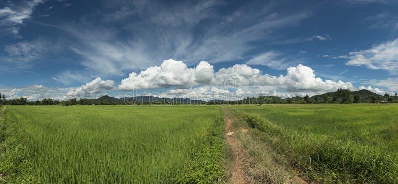 Céu chuvoso bonito e campos verdes do arroz fotos de stock royalty free