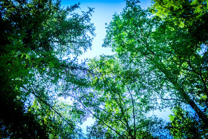 Céu com nuvens e luz do sol com a opinião inferior de ramos de árvore do outono imagens de stock royalty free