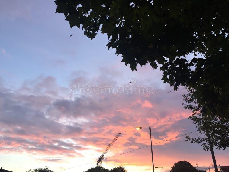 Céu cor-de-rosa fotos de stock