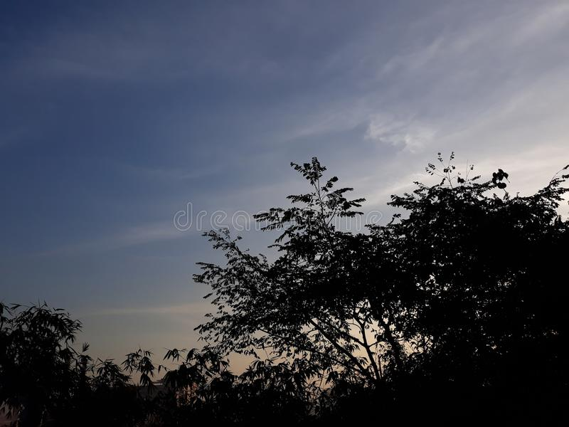 Céu da árvore da natureza foto de stock royalty free