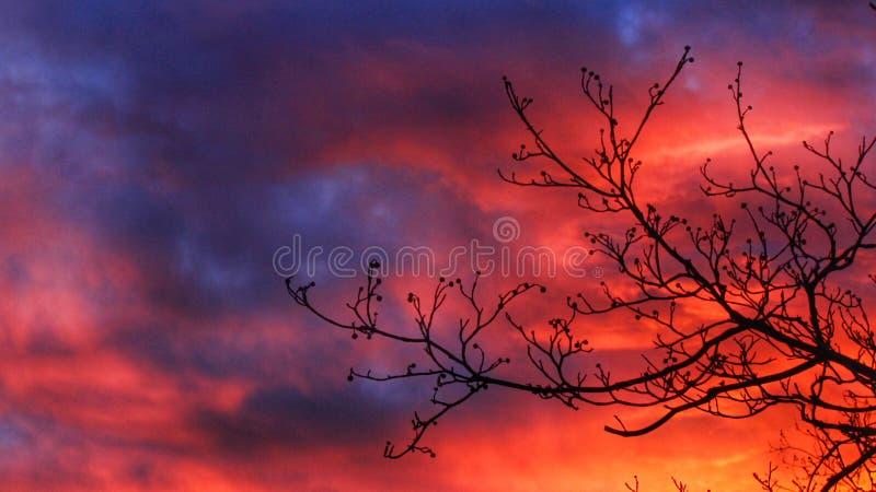 Céu da cor fotografia de stock