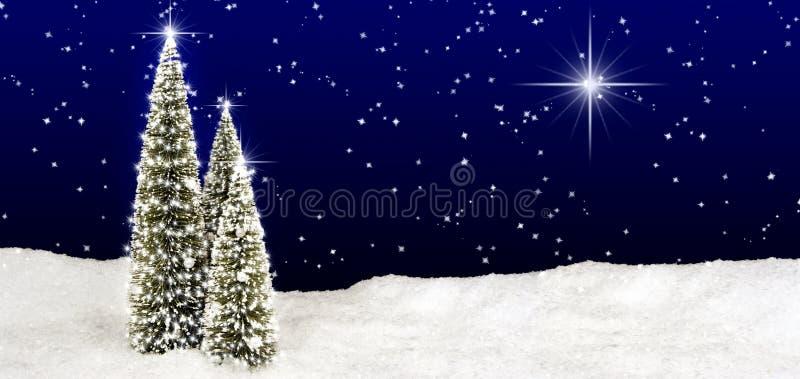 Céu da estrela das árvores de Natal imagens de stock royalty free