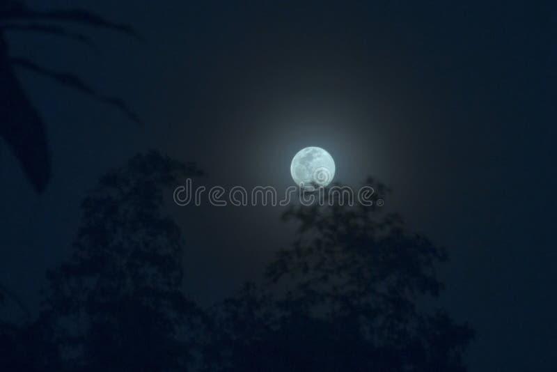 Céu da lua azul ao lado do primeiro plano obscuro das árvores da silhueta com noi fotos de stock