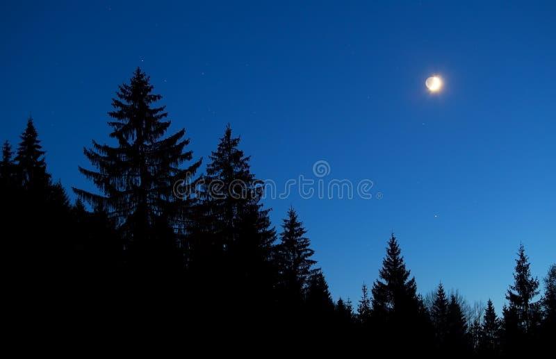 Céu da lua e da estrela sobre a silhueta da floresta na noite imagem de stock