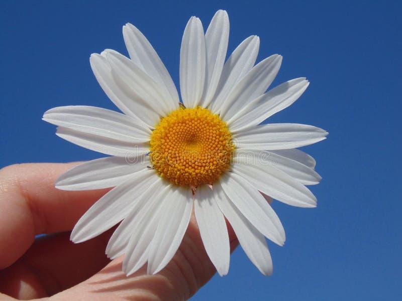 Céu da mão da flor fotografia de stock royalty free