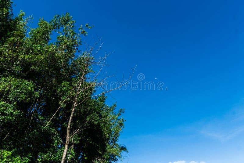 Céu da manhã da lua na claro foto de stock royalty free