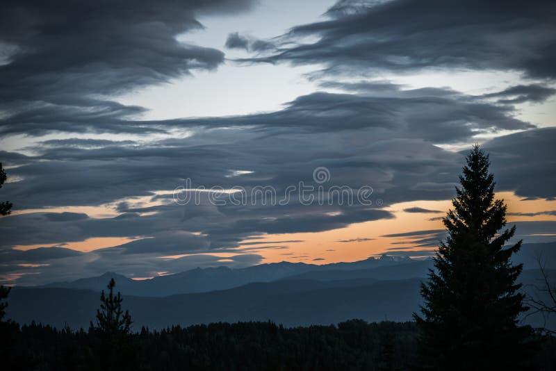 Céu da noite na floresta boreal imagem de stock
