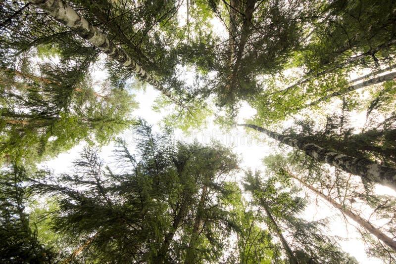 Céu do assoalho da floresta imagem de stock royalty free