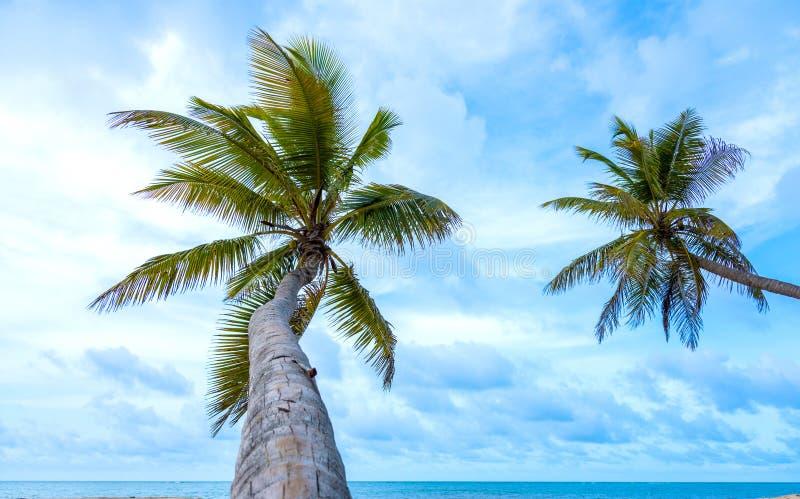 Céu do oceano da palma foto de stock royalty free