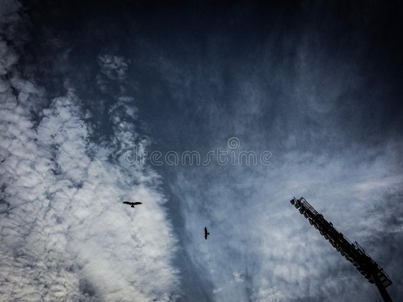Céu do voo de Eagle foto de stock royalty free