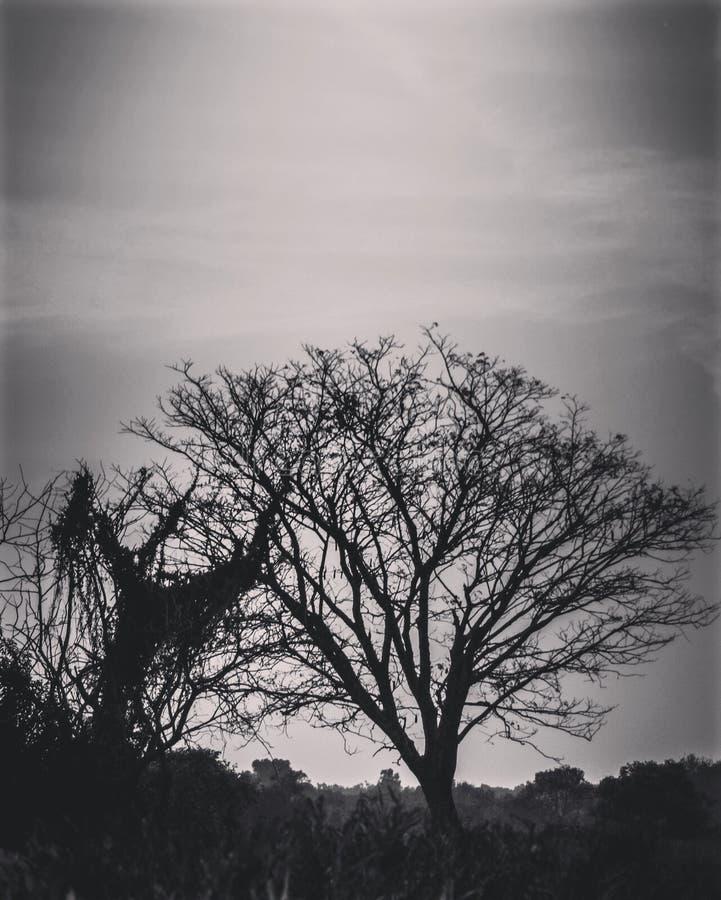 Céu e árvore fotografia de stock