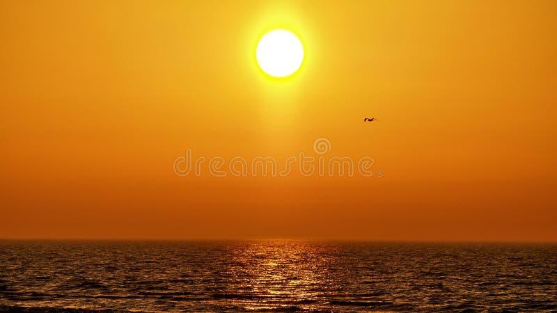 Céu e pássaros alaranjados do por do sol observando sobre o mar fotos de stock