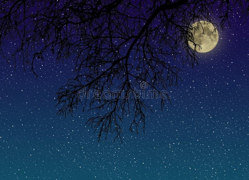 Céu estrelado da noite com uma Lua cheia atrás da opinião do close-up dos ramos de árvore de baixo de foto de stock royalty free