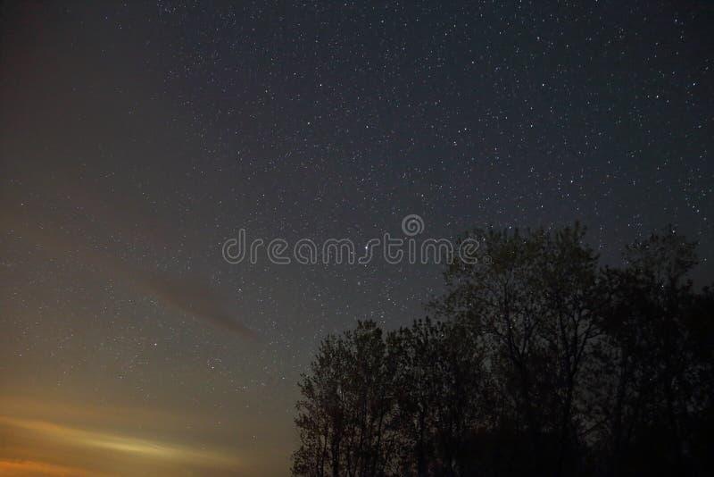 Céu estrelado Forest Silhouette imagem de stock