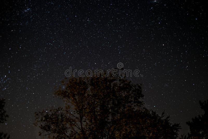Céu estrelado na noite - árvores e estrelas imagem de stock