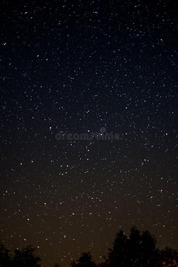 Céu estrelado na noite - árvores e estrelas fotos de stock