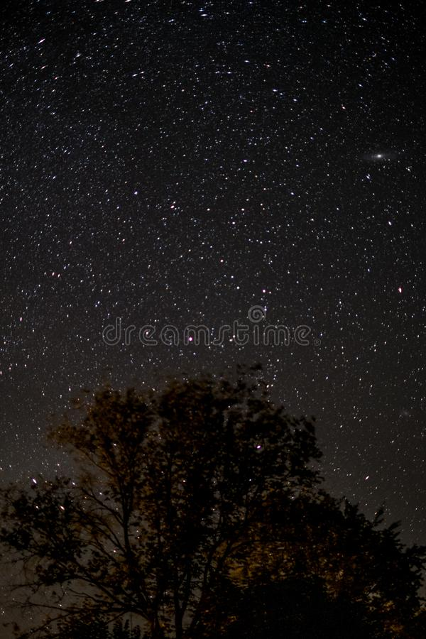 Céu estrelado na noite - árvores e estrelas fotografia de stock royalty free