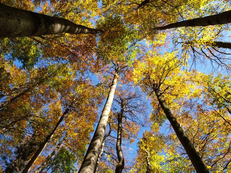 Céu na floresta foto de stock