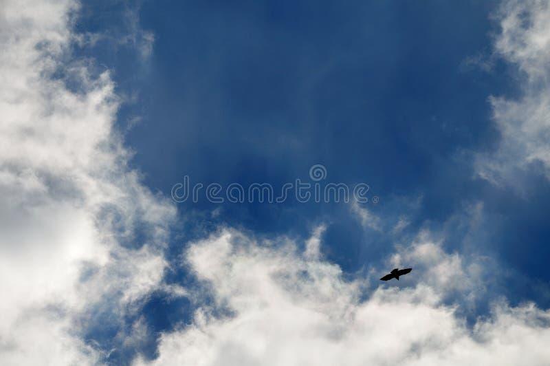Céu nebuloso com a silhueta do pássaro de voo de rapina fotos de stock