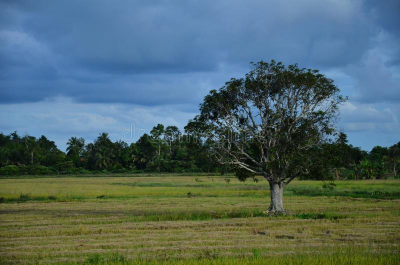 Céu nebuloso com uma árvore solitária imagens de stock royalty free