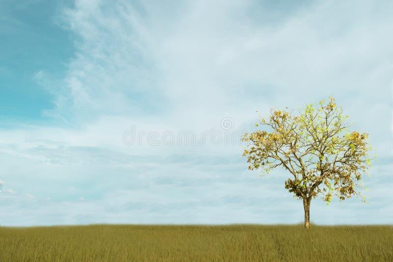 Céu nebuloso e azul branco bonito sobre a árvore isolada no fundo verde do campo foto de stock