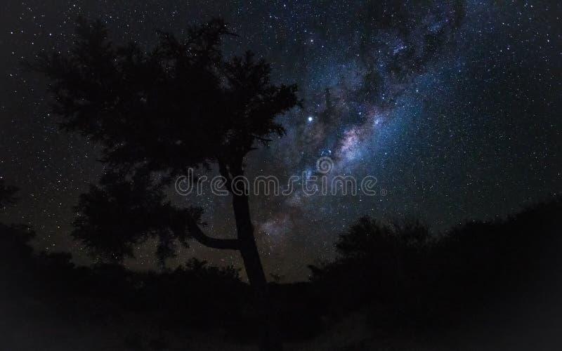 Céu noturno com a galáxia de Milkyway sobre silhuetas da árvore, como visto da costa de Madagáscar fotos de stock royalty free