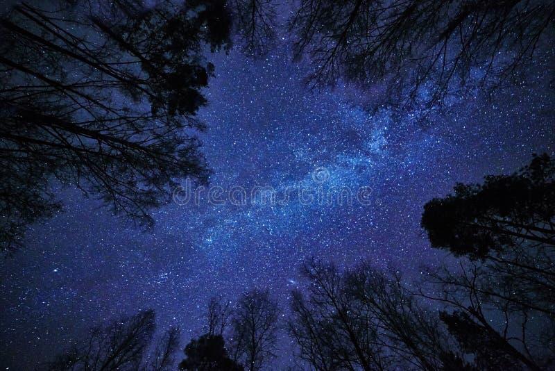 Céu noturno com a Via Látea sobre a floresta e as árvores que cercam a cena imagens de stock
