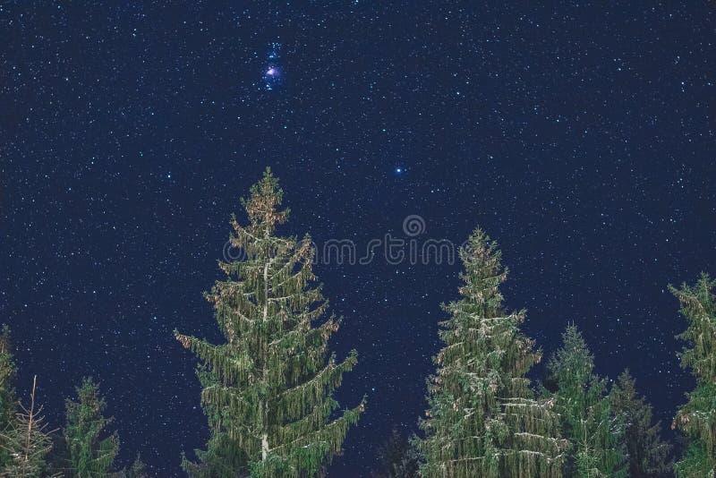Céu noturno e árvores foto de stock