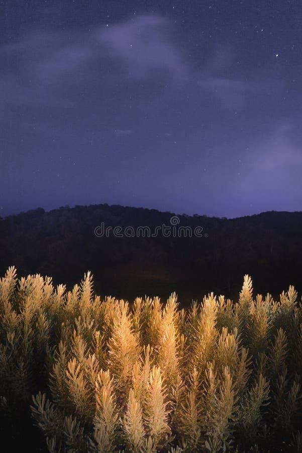 Céu noturno e uma planta imagens de stock