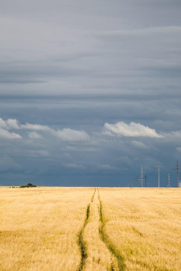 Céu tormentoso sobre um campo de trigo foto de stock